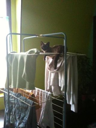 2 nouveaux chatons à la maison + photos d'Eden Les_ch15