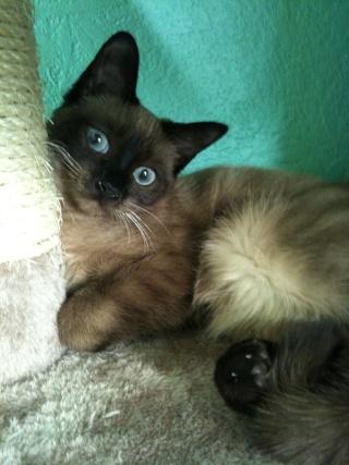 2 nouveaux chatons à la maison + photos d'Eden Les_ch16