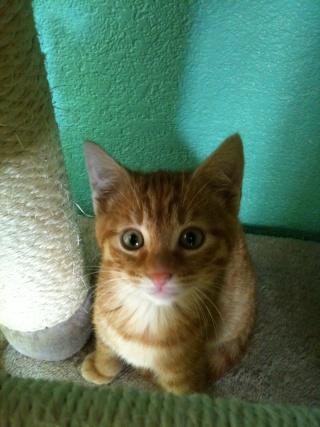 2 nouveaux chatons à la maison + photos d'Eden Les_ch19