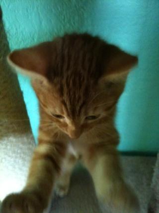 2 nouveaux chatons à la maison + photos d'Eden Les_ch20