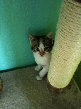 2 nouveaux chatons à la maison + photos d'Eden Les_ch22