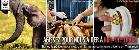 SAUVONS LES ELEPHANTS DAFRIQUE SIGNONS  LA PETITION 1034310