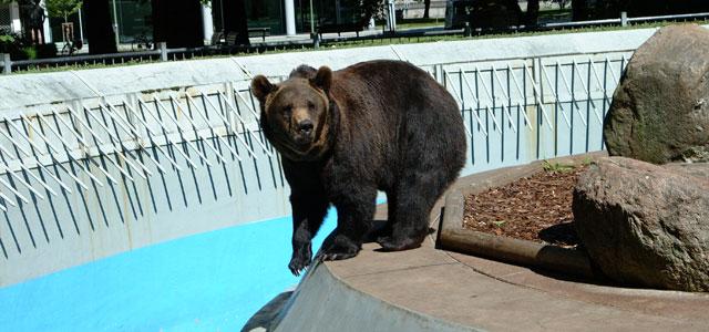 Demandons de libérer  les 2 ours SCHNUTE et MAXI  et de les envoyer dans un sanctuaire (Signez svp) Baer310