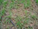 Programme herbicide blé/orge Rg_ill10