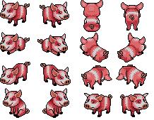 Les cochons arrivent !!! Cochon10