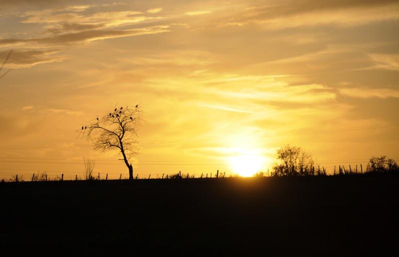 coucher de soleil _dsc0310