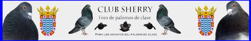 FORO PALOMOS DE CLASE CLUB SHERRY