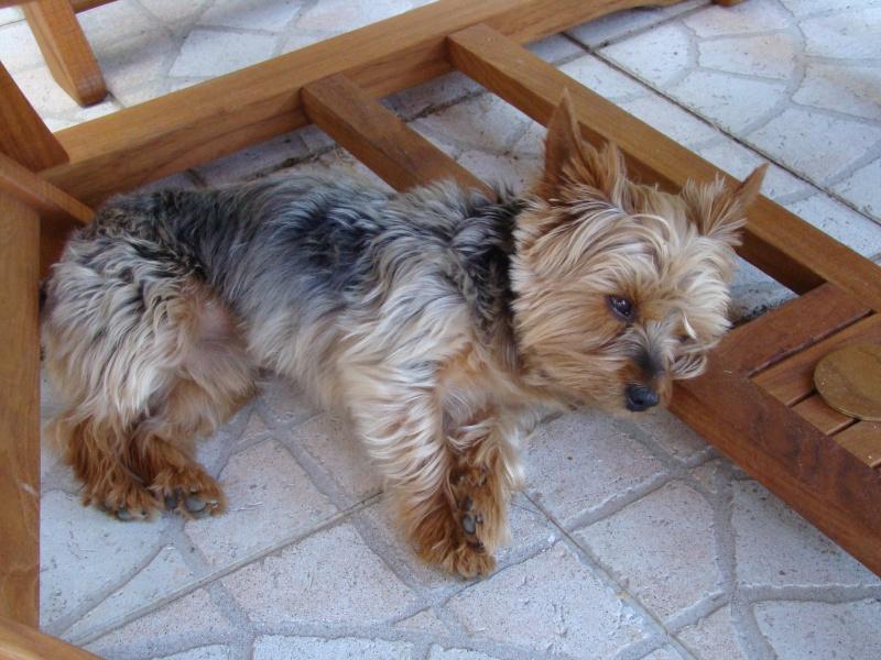 Concours du mois de Février 2010 : Thème : Animal de compagnie Dsc00510