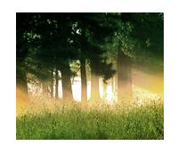 La Forêt des Grands Chênes