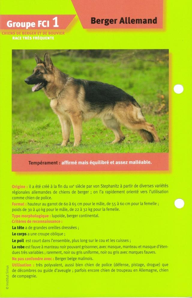 le berger allemand Lastsc10