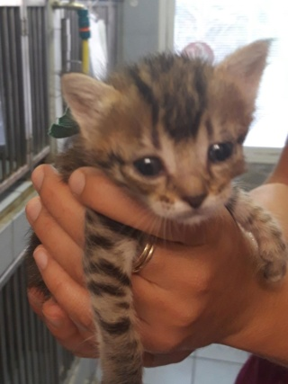5 chatons 1 mois, Var Chaton22