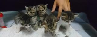 5 chatons 1 mois, Var Chaton25