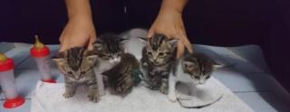 5 chatons 1 mois, Var Chaton26