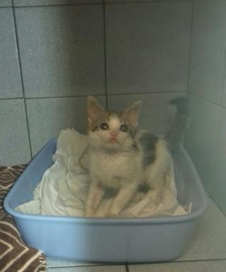 2 chatons, 2 mois, femelle et mâle, Var Femell13