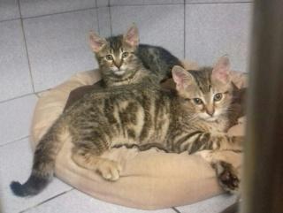 1 femelle, 4 mâles à l'adoption, Var Male_210