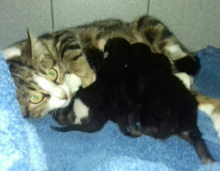 1 femelle écaille de tortue, 1 mâle noir, 1 petite famille Maman_11