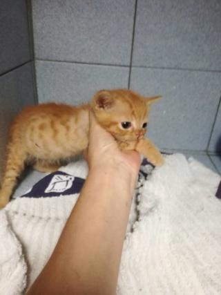 2 chatons, 2 mois, femelle et mâle, Var Triso_10