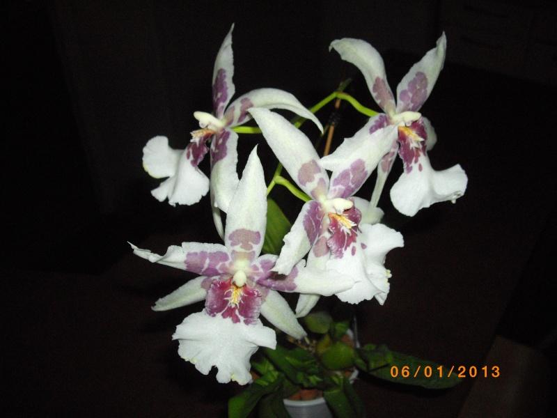 Mes orchidées... par Stape73 - Page 4 Imgp4811