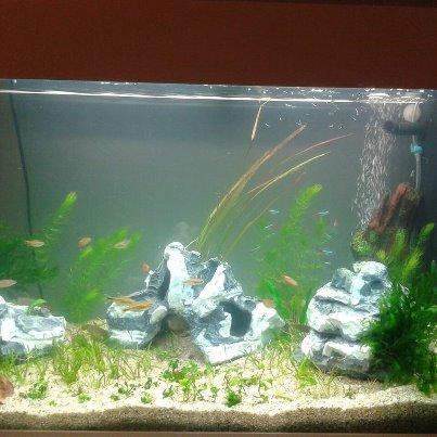 mon 1er aquarium 125L 74598_10
