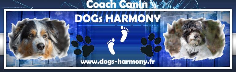 Dogs Harmony