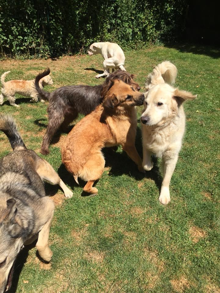 [A L' ADOPTION ] MARLEY chien croisé né le 24/01/2017 chez JULIE ( 24 ) 36321710
