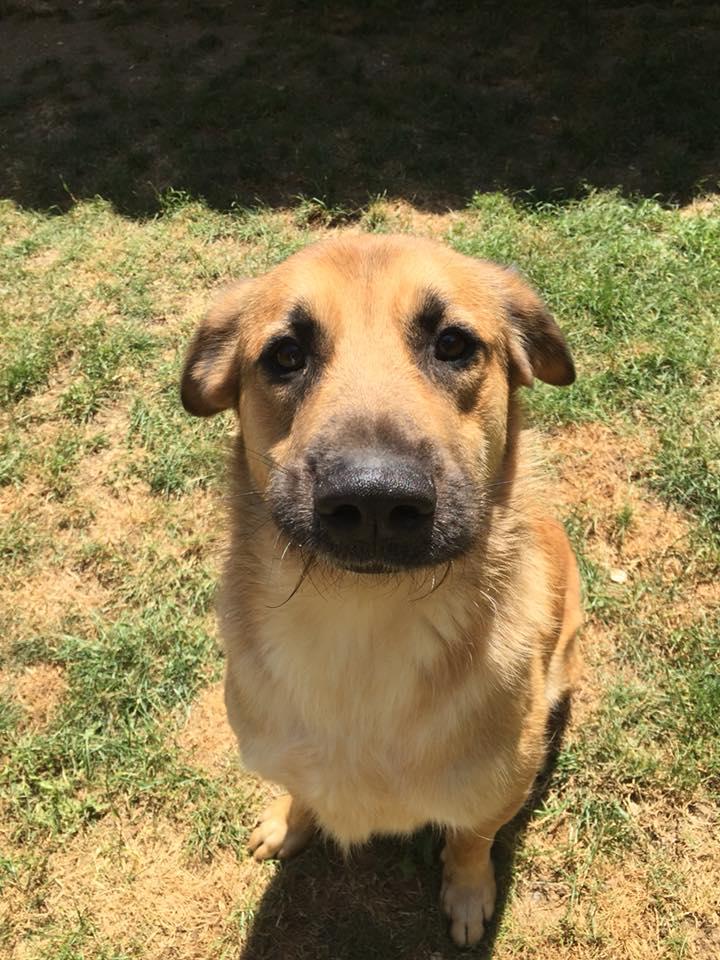 [A L' ADOPTION ] MARLEY chien croisé né le 24/01/2017 chez JULIE ( 24 ) 36448110