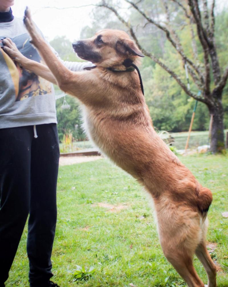 [A L' ADOPTION ] MARLEY chien croisé né le 24/01/2017 chez JULIE ( 24 ) 71515910