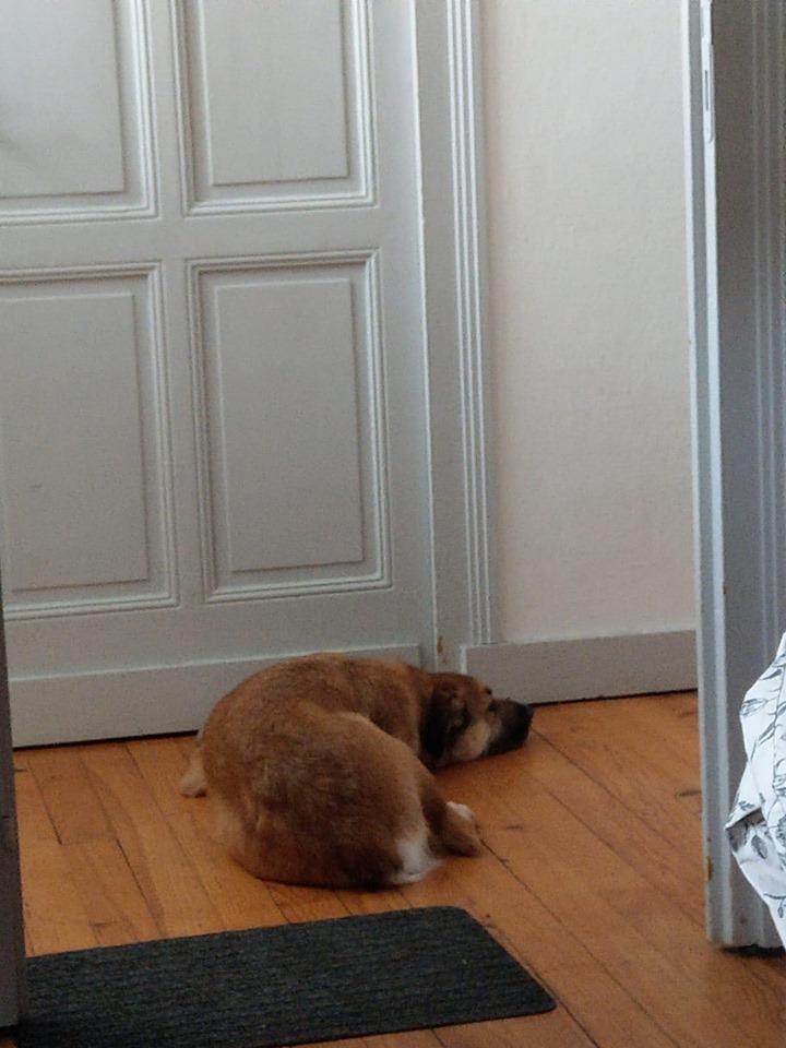 [A L' ADOPTION ] MARLEY chien croisé né le 24/01/2017 chez JULIE ( 24 ) 73072110