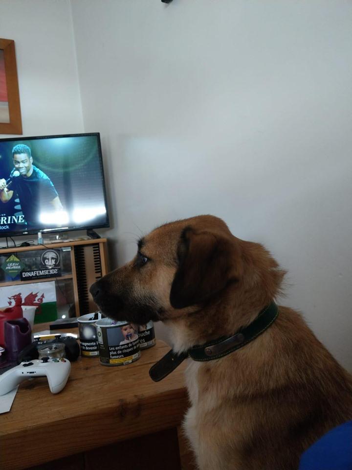 [A L' ADOPTION ] MARLEY chien croisé né le 24/01/2017 chez JULIE ( 24 ) 75051710