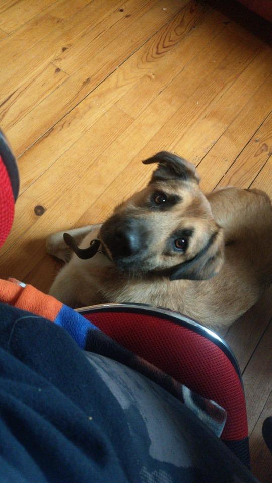 [A L' ADOPTION ] MARLEY chien croisé né le 24/01/2017 chez JULIE ( 24 ) 75481810