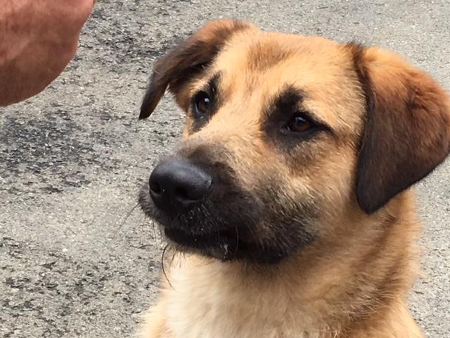 [A L' ADOPTION ] MARLEY chien croisé né le 24/01/2017 chez JULIE ( 24 ) Image411