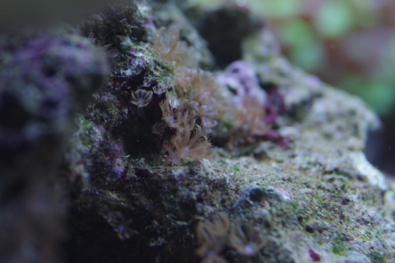 identification corail mou? Imgp2311