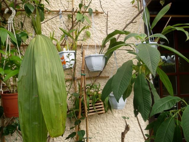utilisation de bambous - Page 2 22-11-11