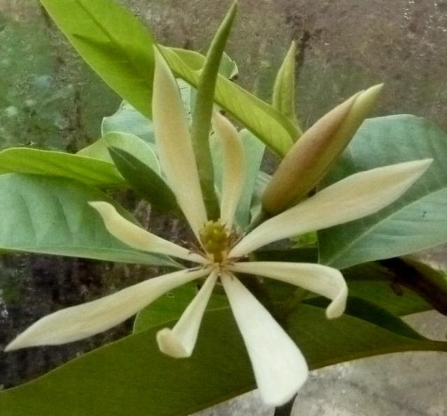 Plantes parfumées du moment 30-12-10