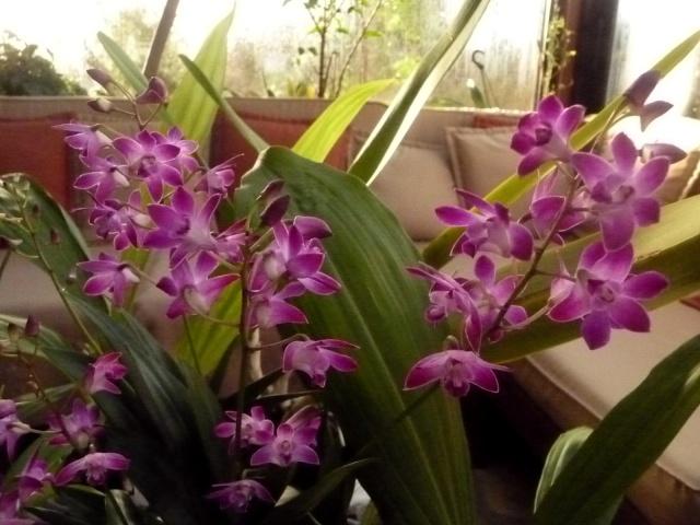 Plantes parfumées du moment 30-12-13