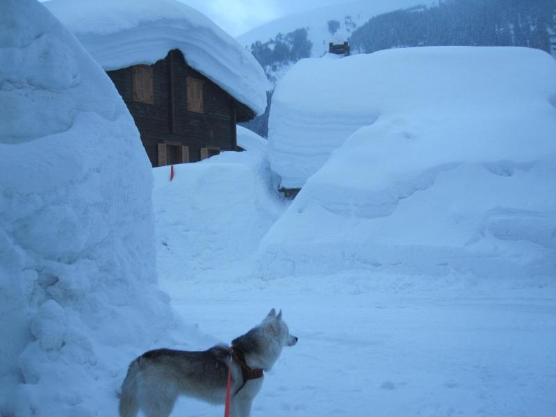 Nouvelles courses de Saskia dans la neige - Page 2 Img_1910