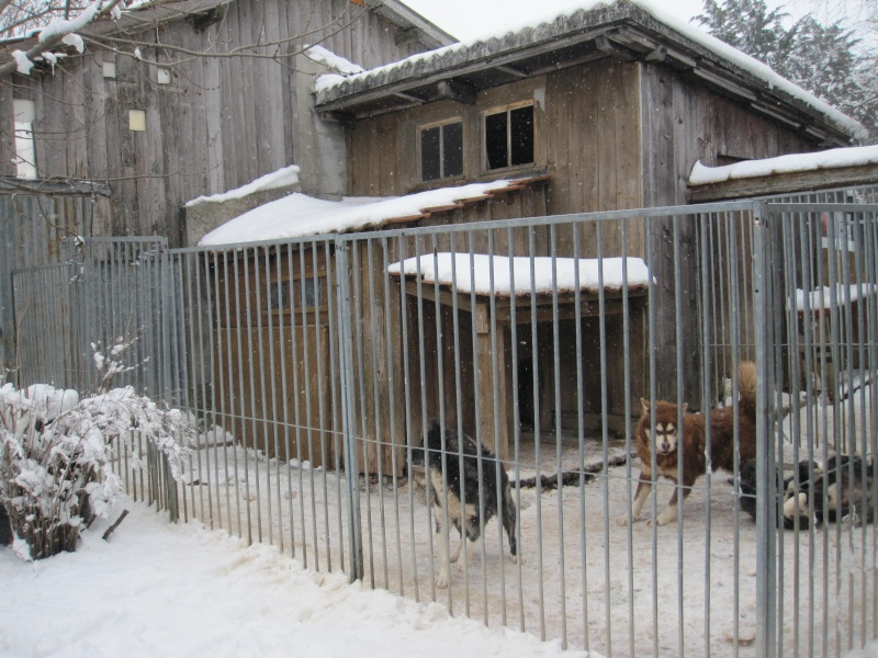 Pour le ski-joering à deux chiens Img_5611