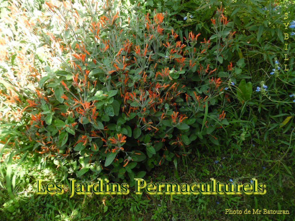 Les Jardins Permaculturels