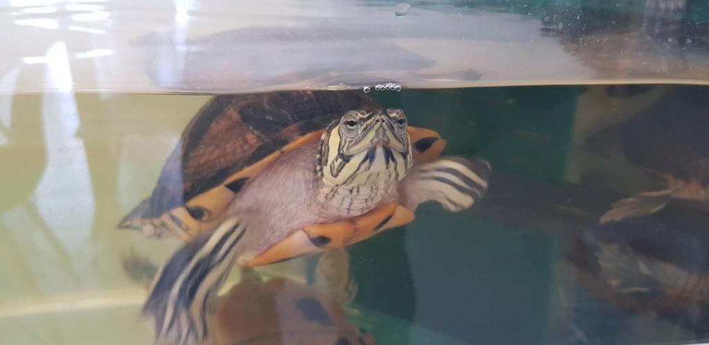 bassin extérieur pour tortue d'eau ? 15433210