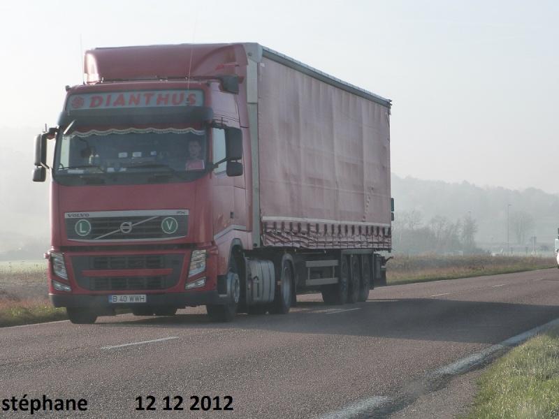 Dianthus P1050067