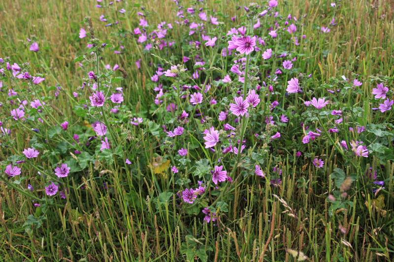 Fleurs ... tout simplement - Page 17 Talus_10