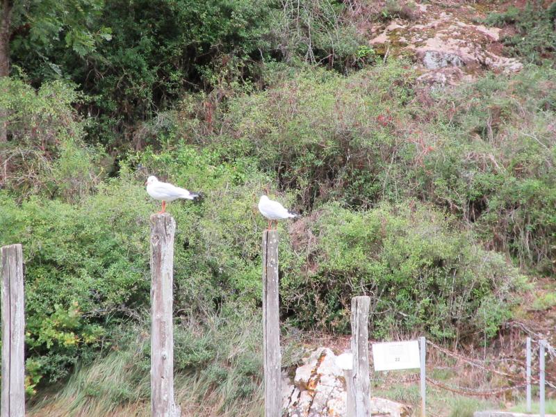 Animaux, oiseaux... etc. tout simplement ! - Page 21 Vigies10