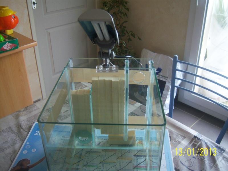 bricolage sur nano dennerle 20 litres. 101_3512