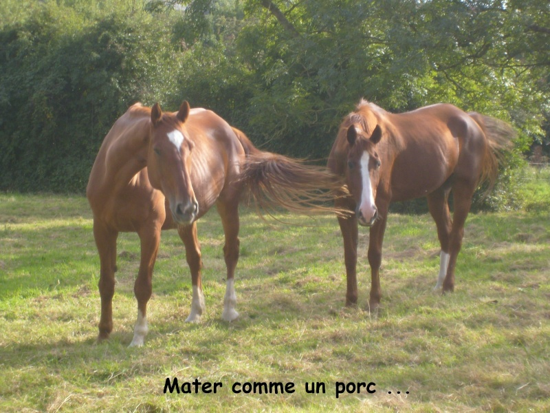 Thème de Janvier - Page 4 Photo_10