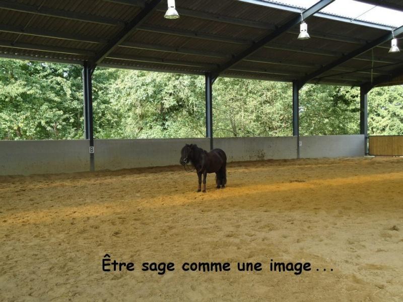"""Concours Photos Janvier 2013 : """"Cheval et Expression"""" Photo_14"""