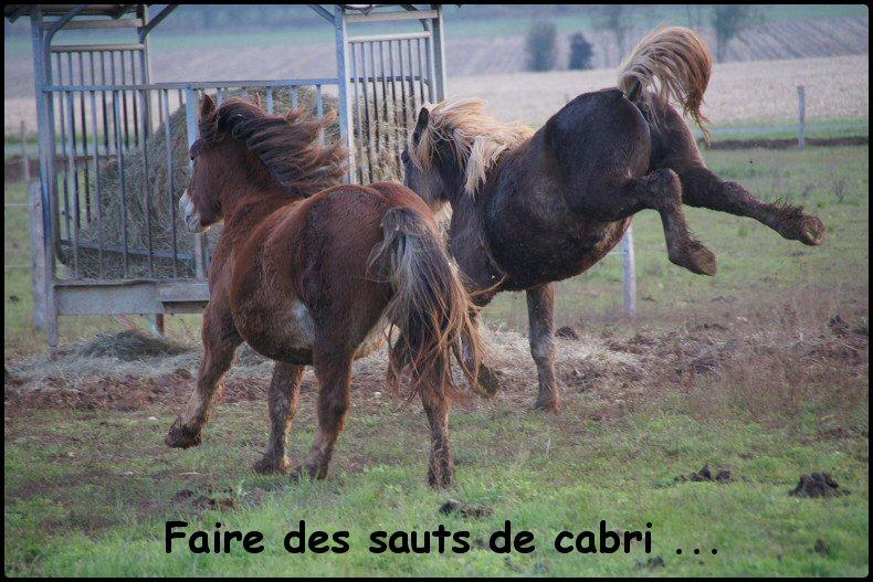 """Concours Photos Janvier 2013 : """"Cheval et Expression"""" Photo_34"""