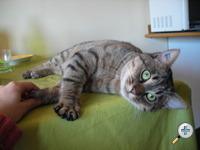 Les chats à adopter qui s'entendent avec les chiens Dscn2910