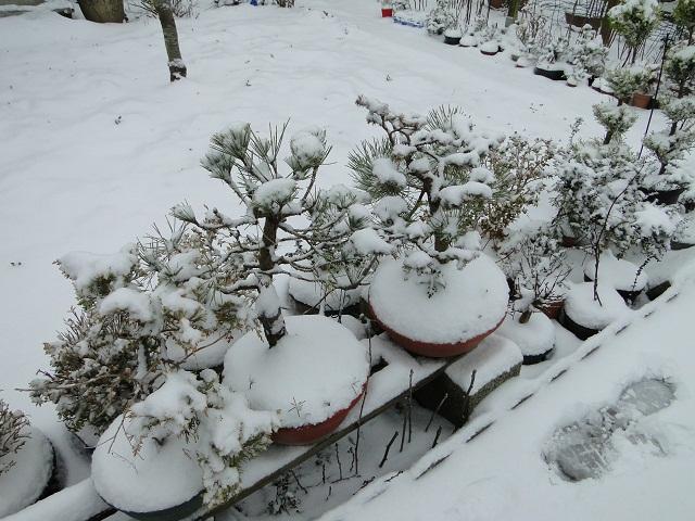 la neige  00311
