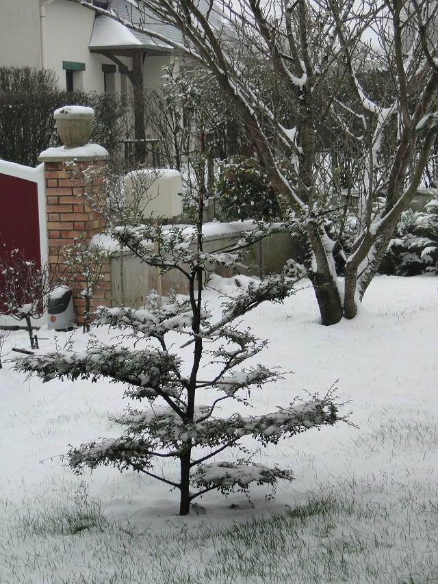 la neige  Odc_ja10