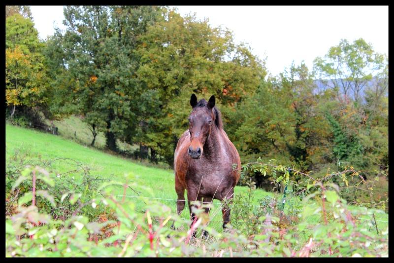 CONCOURS PHOTOS : Chevaux et nature.... - Page 4 Img_0011
